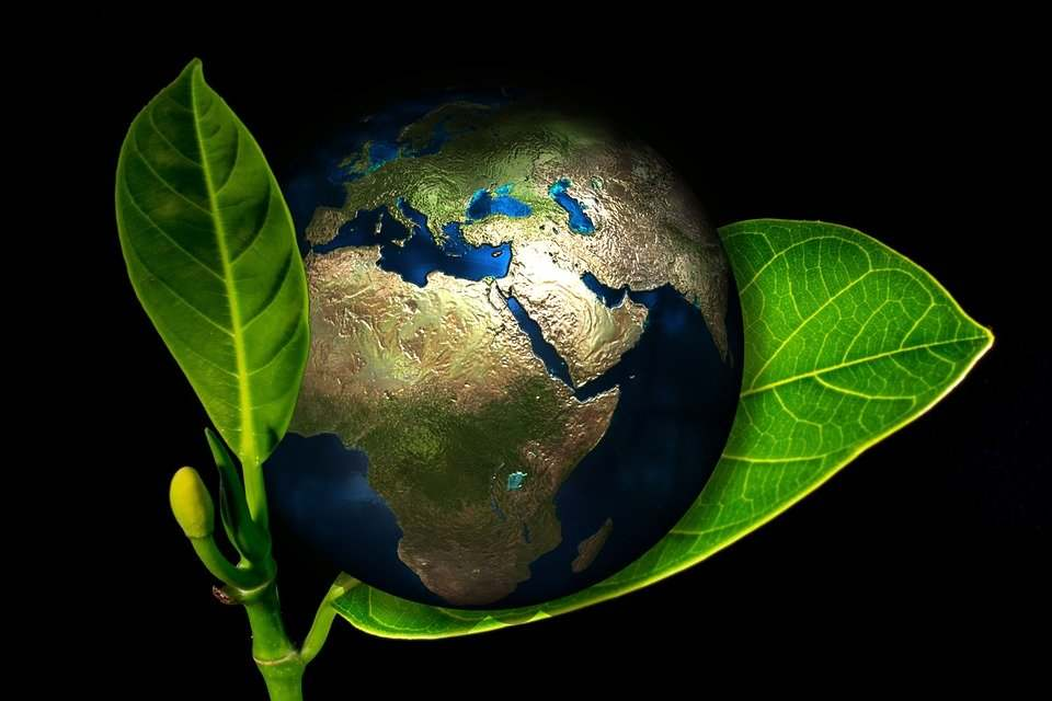 dar de baja greenpeace